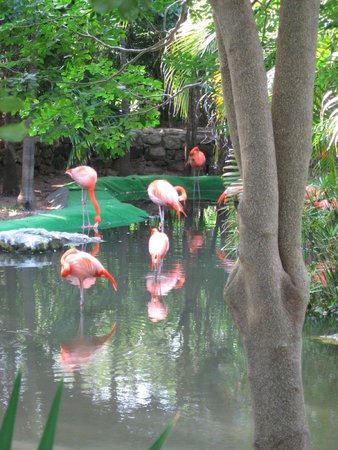Grand Palladium Colonial Resort & Spa: Flamingo Pond at resort