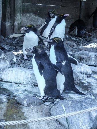 Living Coasts: Penguins!