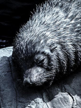 Living Coasts: Seal closeup