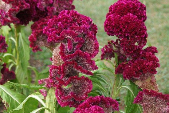 Monticello : Flowers