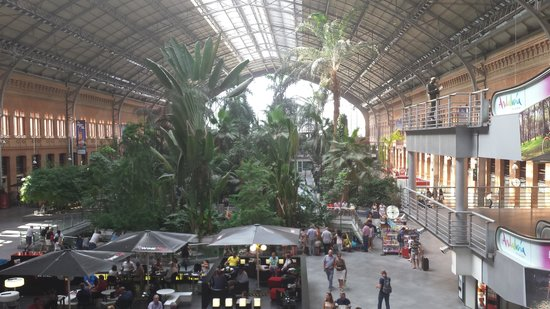 Estacion de Atocha: Jardín interior