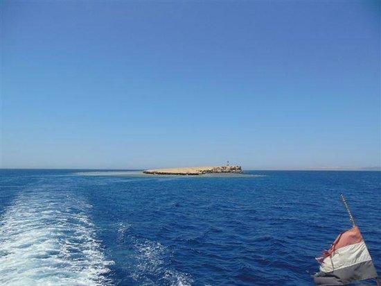 New Son Bijou Diving Center : Umm Gamar
