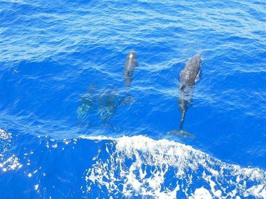 New Son Bijou Diving Center : Delfine neben dem Boot