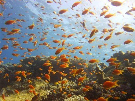 New Son Bijou Diving Center : Aquarium