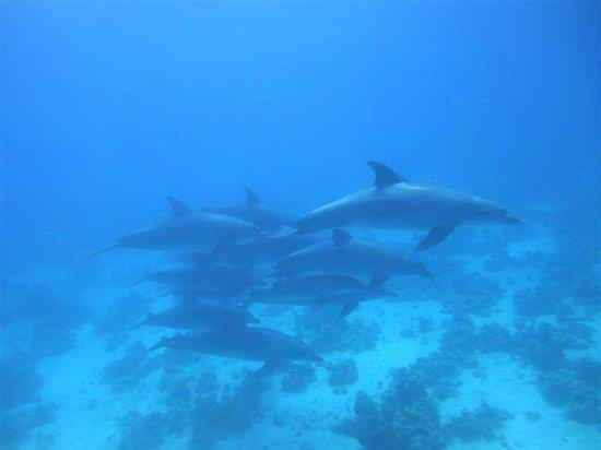 New Son Bijou Diving Center : Delfine
