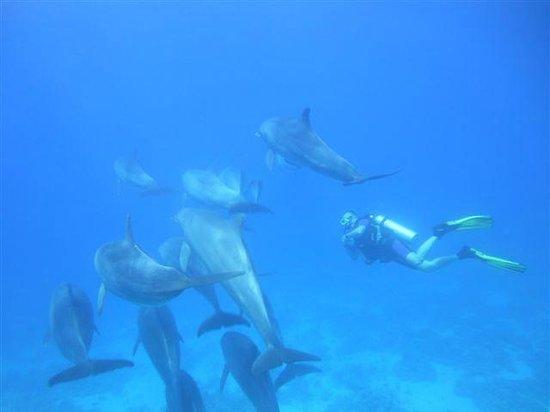 New Son Bijou Diving Center: Delfine beim Tauchgang