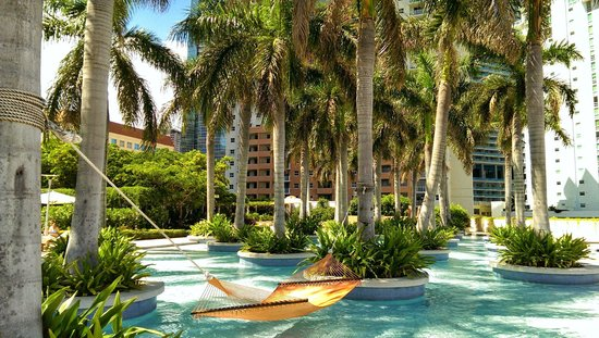 Four Seasons Hotel Miami: Hammock in the shallow end among palm trees.
