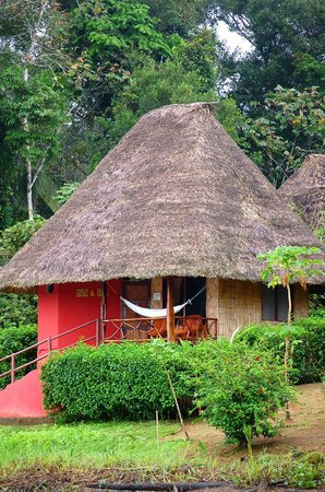 Napo Wildlife Center Ecolodge: Cabin 6