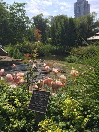 Lincoln Park Zoo: Great view of flamingoes!