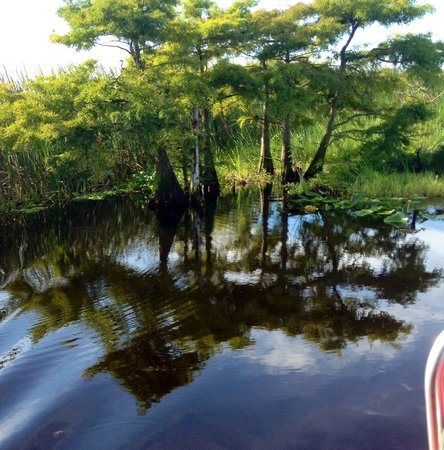 Gator Bait Airboat Adventures: Stunning nature tour