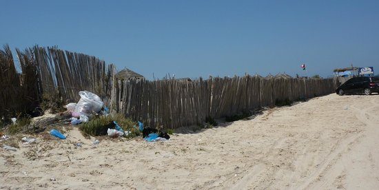 Green Palm : Le chemin qui conduit à la plage
