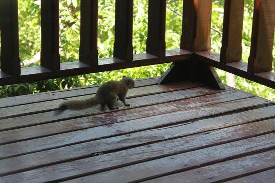 Montalay Beach Resort : petit visiteur matinal :)