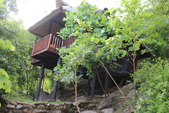 Montalay Beach Resort: tree top bungalow