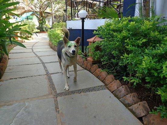 Santana Beach Resort : cute doggie
