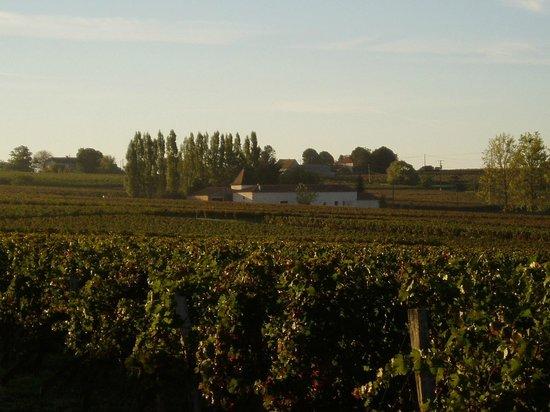 Château La Tour de Chollet : view of house through vines