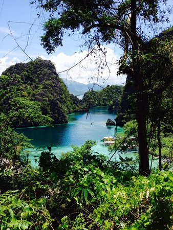 Coron Ecolodge : lovebirds