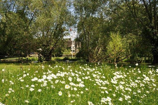 Old Swan & Minster Mill: Wild-flower meadows