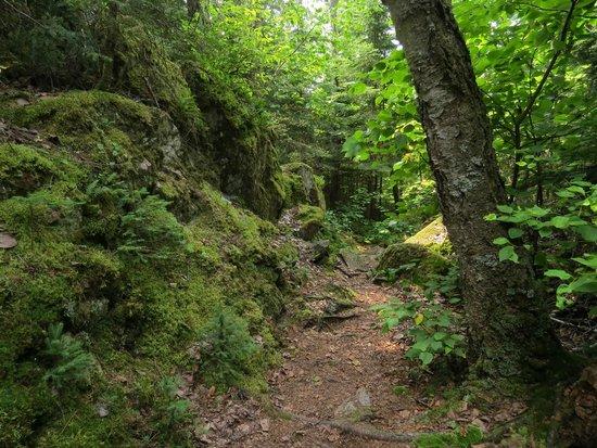 Lake Superior Provincial Park: Nokomis trail