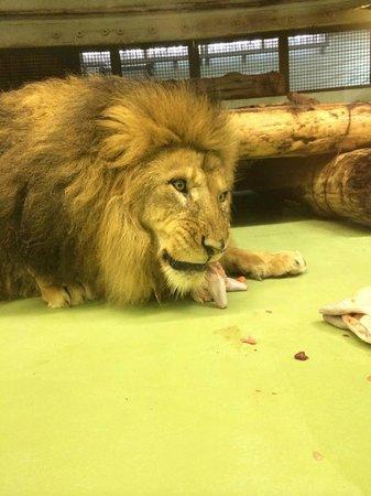 Maruyama Zoo: ご飯の時間に出くわしました。