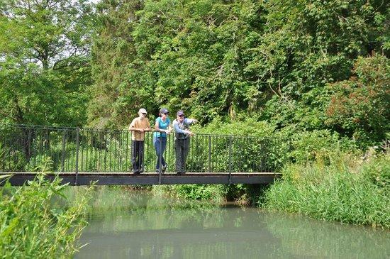 Old Swan & Minster Mill: Windrush Walk