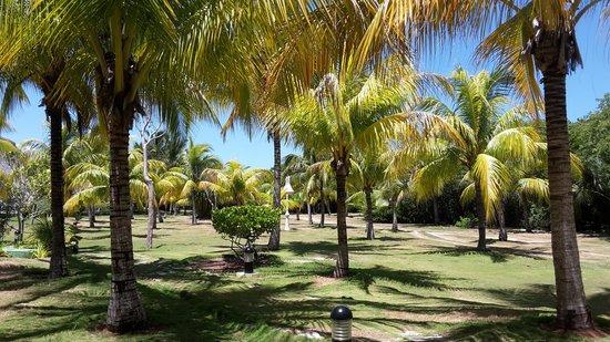 Royalton Hicacos Varadero Resort & Spa: территория