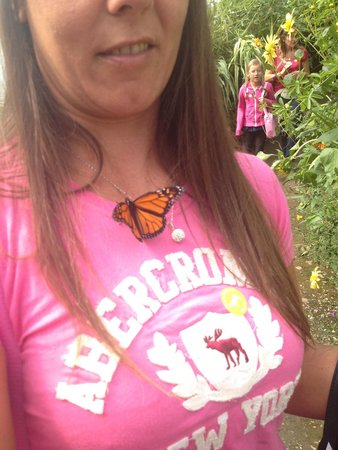 Rare Breeds Centre: Butterfly enclosure, fab