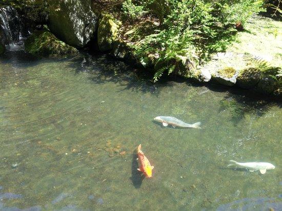 Portland Japanese Garden: Carpas