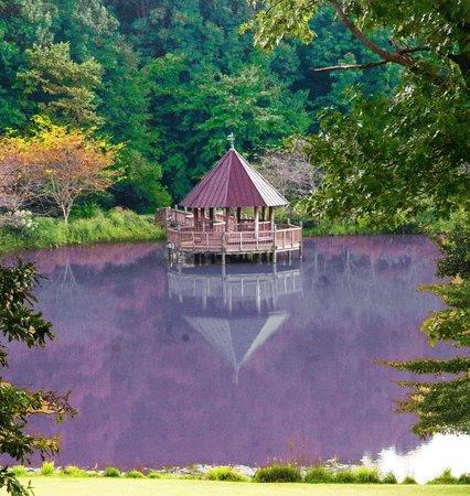 Meadowlark Botanical Garden: Vista from Spiral Hilltop