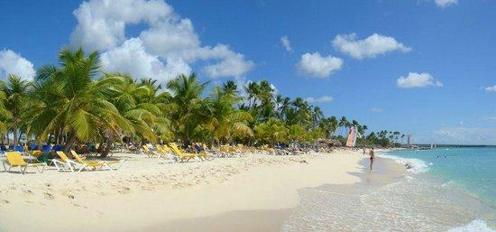 Viva Wyndham Dominicus Beach: palmeras en la playa