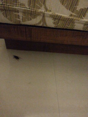 A2 Resort: แมลงสาบที่ โรงแรม เอทู รีสอร์ท ภูเก็ต