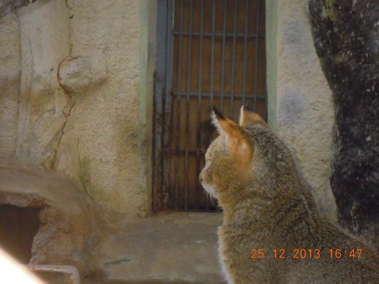 Birsa Zoological Park: Wildcat