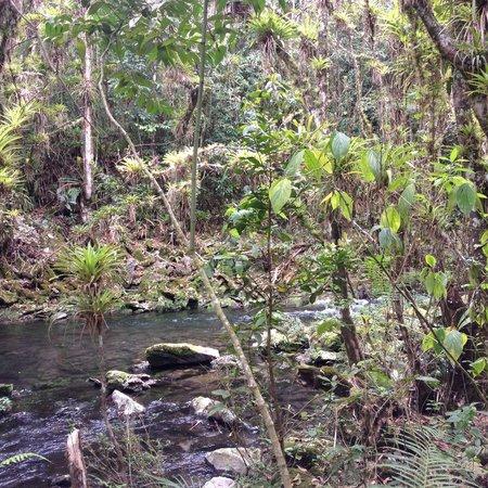 El Nicho Waterfalls: Fluss