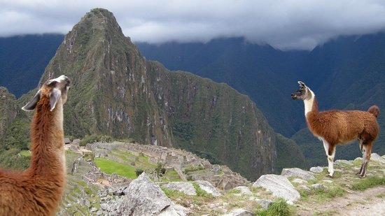Machu Picchu: Me animé a subir al Huayna Picchu, la montaña aledaña.