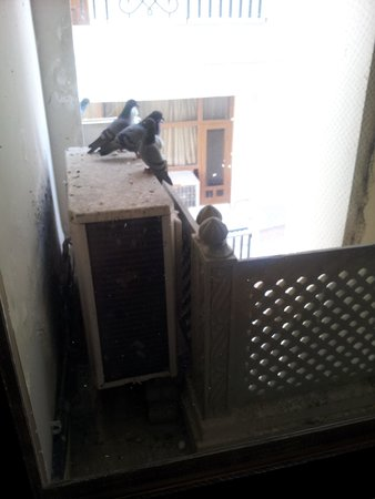 Nahargarh Haveli: Pigeon in the Hotel