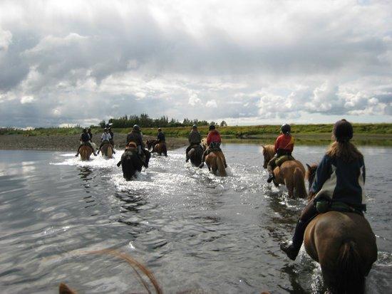 Riding Tours South Iceland : at krydse en flod til hest er en oplevelse
