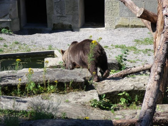 Bärenpark: Oso retozando
