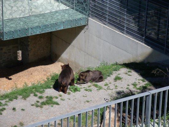 Bärenpark: Osos del parque
