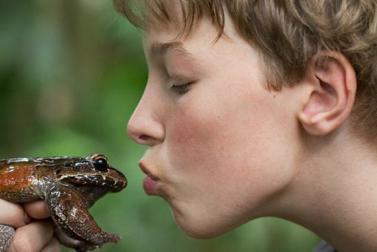 Frogs Heaven: Kissing a toad