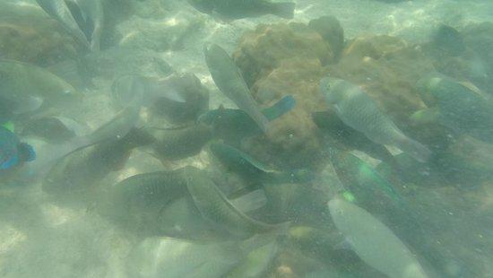 Haadtien Beach Resort: Fish bit further out