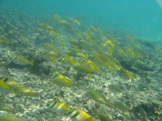 The Haad Tien Beach Resort: Fish near the beach front
