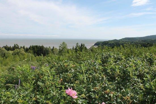 Falcon Ridge Inn: View on Bay of Fundy