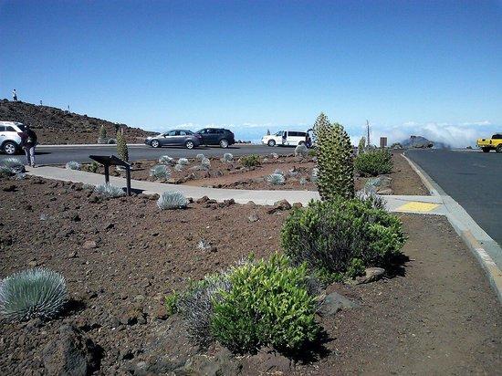 Haleakala Crater : Silversword garden at summit