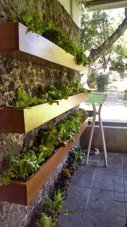 Casa Fernanda Hotel Boutique: Organic lettuce