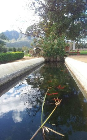 Madre's Kitchen: fish pond with a view