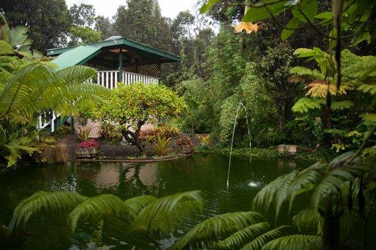 Lokahi Lodge : Jardin autour de l'accueil
