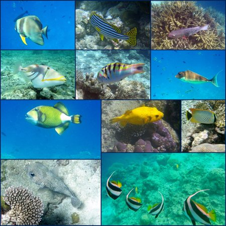 Kurumba Maldives: some fish of the reef
