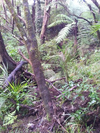 Alice Eaves Scenic Reserve: Eaves Bush reserve