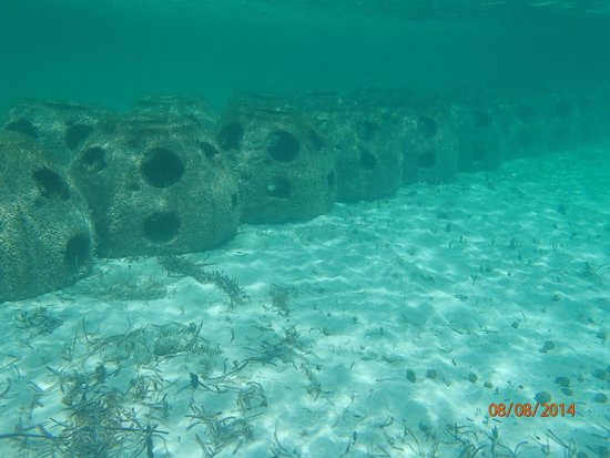 Paradise Cove : Reef balls