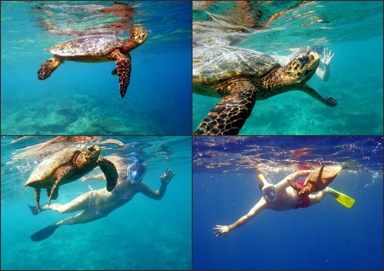 Kurumba Maldives : we met the turtle on the house reef!