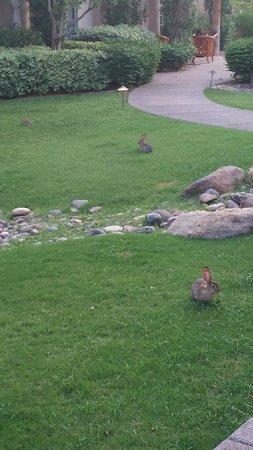 The Scott Resort & Spa: cute lil bunnies around the resort
